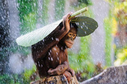 2015 Sony Uluslararası Mobil Fotoğraf Ödülü sahibini arıyor
