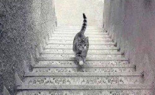 Kedi merdivenlerden aşağı mı iniyor yukarı mı çıkıyor? İşte cevabı!